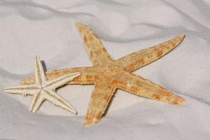 starfish-343